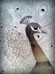 peacock feather drawing in pencil