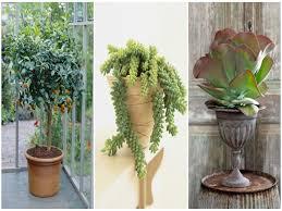 best indoor house plants free best indoor house plants weird elegant 15 cool lakaysports