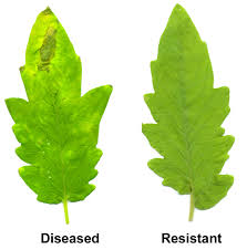 Symptoms Of Plant Disease - overview of plant defenses