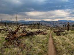 Buffalo Creek Trail Map Go Hike Colorado Buffalo Creek Recreation Area Pike National Forest