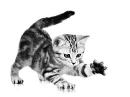 Cute Black And White Wallpapers by Image Gray Playful Kitten Grey Cat White Cute Stripes Hd