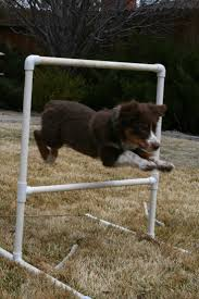 australian shepherd jumping 114 best aussies are awesome images on pinterest aussies