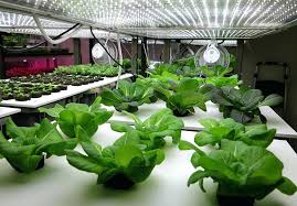 indoors garden indoor microgreen garden farm this warehouse in is growing a tiny