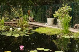 australian native aquatic plants pool to pond u2013 converting backyard swimming pools to ponds for
