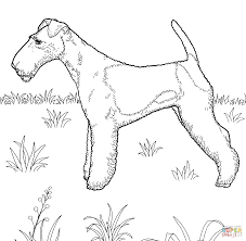fox terrier coloring page free printable coloring pages