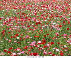 flower garden in japan stock photos u0026 flower garden in japan stock