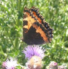 adur butterfly list 2010