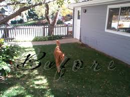 Landscaping Ideas For Backyard With Dogs by Triyae Com U003d Dog Friendly Backyard Landscaping Various Design