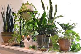 Indoor Vine Plant Arranging Indoor Plants Little Paths So Startled