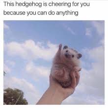 Meme You Can Do It - this hedgehog is cheering for you because you can do anything