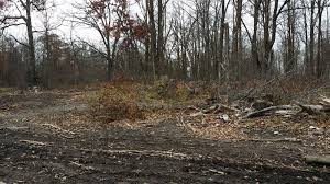 Ghost Hunting Blinds Show Off Your Blind Or Stand Crossbow Nation Forum
