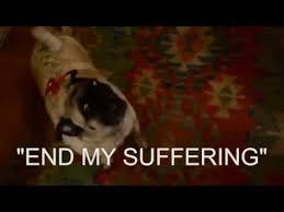 Depressed Pug Meme - pug party god is dead youtube