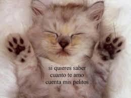 imagenes de gatitos sin frases regala imágenes de gatitos lindos con frases para enamorar