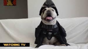 bulldog dressed up as darth vader dog costume youtube