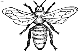 bee outline free download clip art free clip art clipart