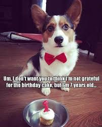 Corgi Birthday Meme - brook meadow veterinary hospital p a home facebook