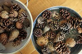 how to clean pine cones for crafts see ya bugs