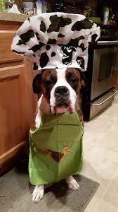Boxer Puppy Halloween Costumes 12 Costumes Prove Boxer Dogs Win Halloween