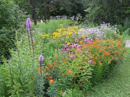 native michigan plants ten steps michigan wildflower farm