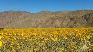 Where Is Anza Borrego by Your Corner Winter Rain Sets Up Historic Super Bloom Nbc 7 San