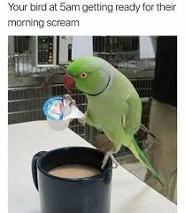 Parrot Meme - 316 best parrot sayings images on pinterest