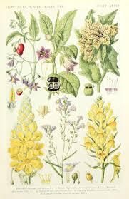 british native plants best 25 british wild flowers ideas on pinterest british flowers