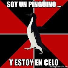 Penguin Meme Generator - soy un pingüino y estoy en celo socially terrifying penguin