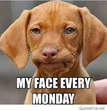 Dodg Meme - my face every monday funny sad dog meme picture quotes pics