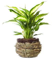top house plants 10 indoor plants that are poisonous and dangerous top 10 home