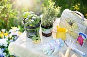 vegetable gardening archives the best gardening info