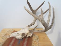 deer antler home decor deer antler home decor fence ideas skull home decor designs ideas