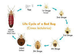 Bed Bug Heat Treatment Cost Estimate by Waco Bed Bug Removal Waco Pest