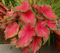 149 best decorative colorful foliage images on