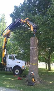 stump removal franklin tree removal milwaukee certified