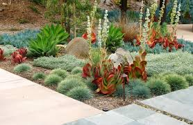 desert plants landscaping ideas desert landscaping ideas