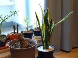 houseplant care series pt 6 common houseplant pests