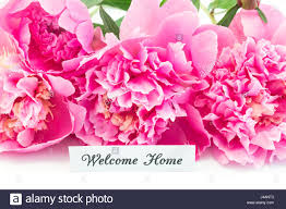 The Pink Peonies by Welcome Home Card With Bouquet Of Pink Peonies On White Background