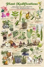 plants native to indiana uw botany store university of wisconsin madison