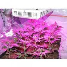 led marijuana grow lights full spectrum 300w led grow light for medicinal marijuana plants