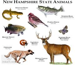 New Hampshire wild animals images State animals of new hampshire line art and full color illustrations jpg
