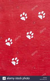 wall red paws white wood wall paints symbol marks railway line