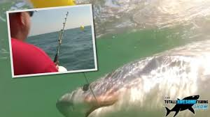 great white shark is u0027hunting off britain u0027s shores u0027 claims expert