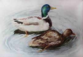 original watercolor painting mallard duck pair original