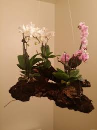 4 Pot Orchid Planter Floating Island