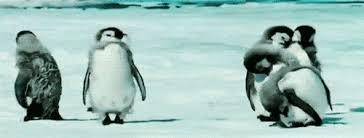 Cute Penguin Meme - the 25 most important penguin gifs on the internet