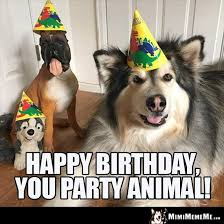 Birthday Meme Dog - funny dog party jokes partying doggie humor canine party laughs