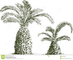 sketch of palm trees royalty free stock image image 35490346