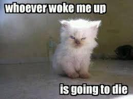Meme Sleepy - sleepy cat memes we can all relate to these adorably sleepy cats