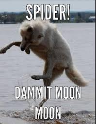 Moon Moon Meme - i love moon moon things moon moon pinterest moon wolf and animal