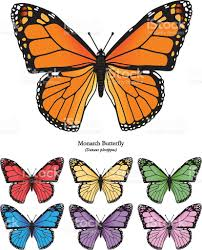 monarch butterfly vector illustration stock vector more
